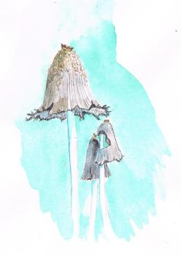 Common ink cap