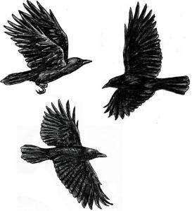 flying_crow_flash_by_rotten_alice-d2yegtz