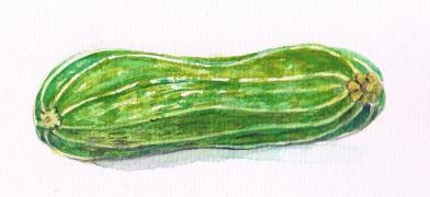 marrow.jpeg