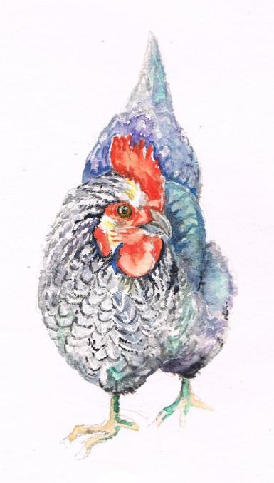 grey-hen