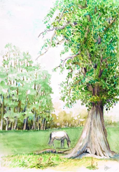 oaktree1