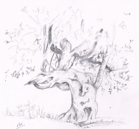 box tree