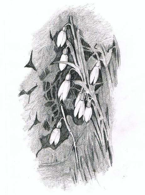 snowdrop neg